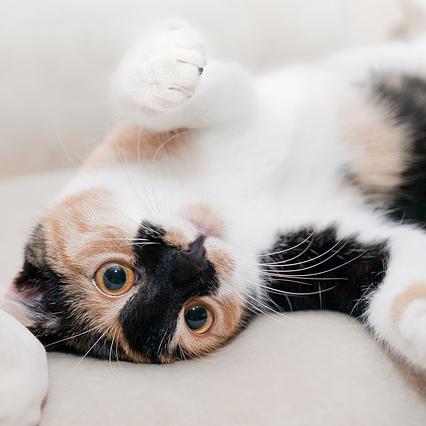 リラックスしている猫の画像